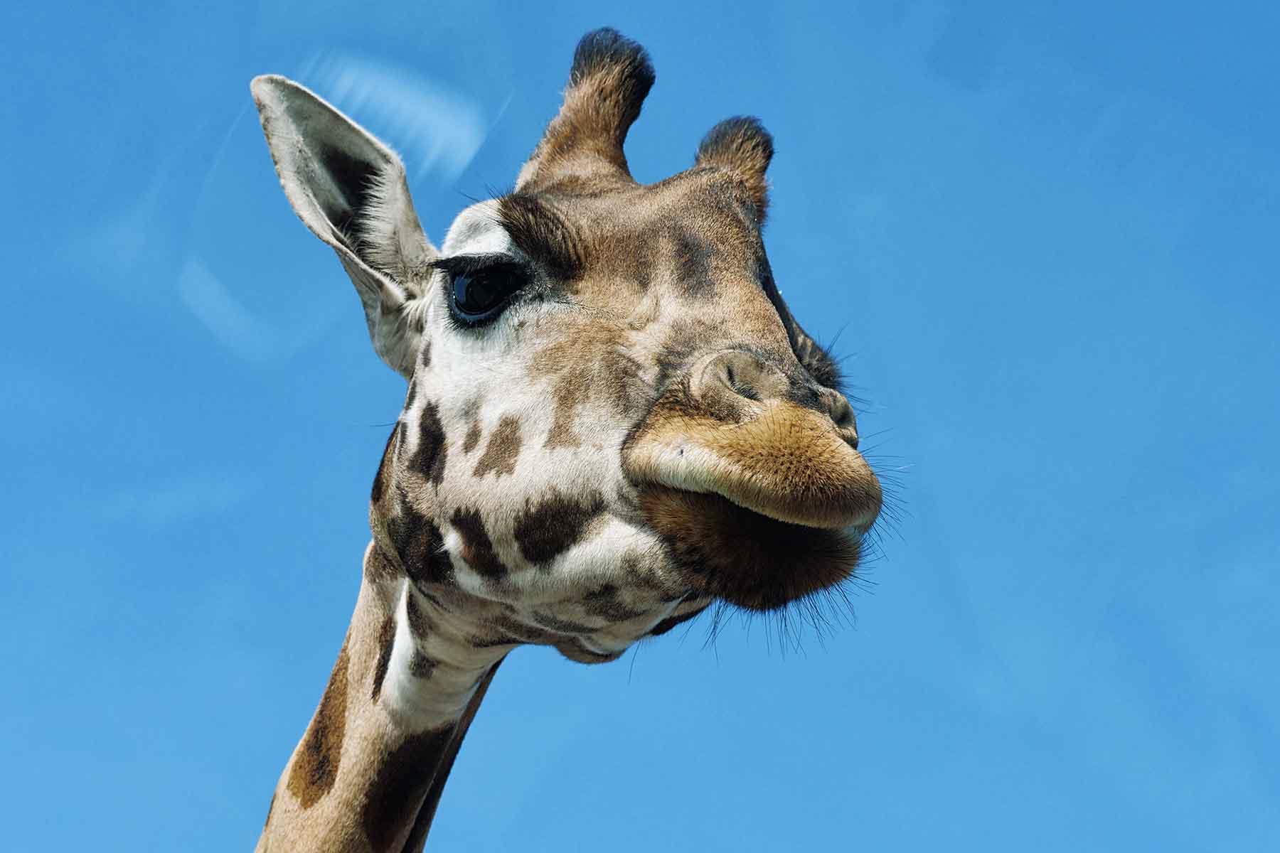 Zoos und Tiergärten - cover